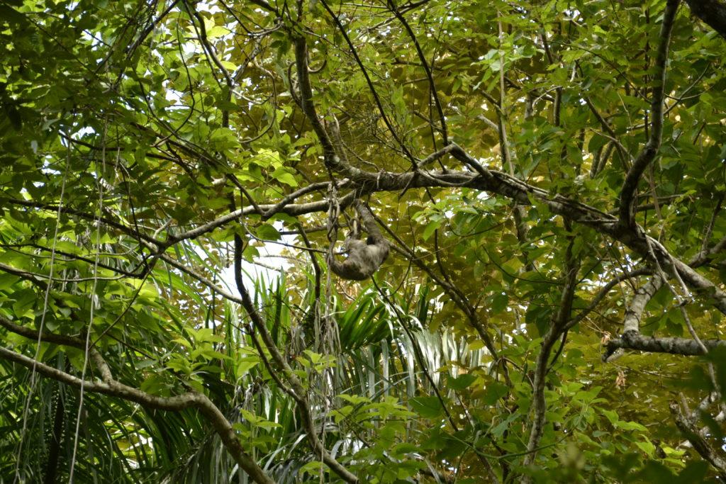 Rainforest in Panama City
