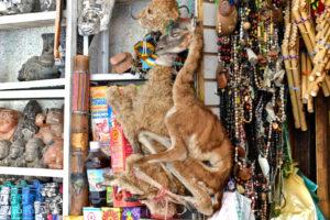La Paz, Bolivia Lama - Bolivia Travel Tips