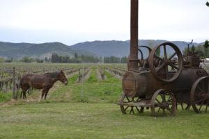 Wines in Valaparaiso and Santa Cruz in Chile