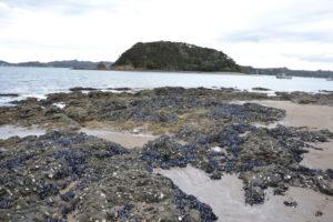 Landscape New Zealand - - New Zealand Travel Tips