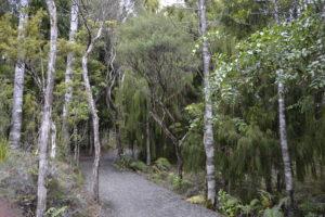 Waipoua Kauri trees, New Zealand - New Zealand Travel Tips