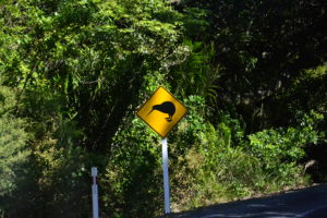 Street sign kiwis take care of Kiwis in New Zealand - New Zealand Travel Tips