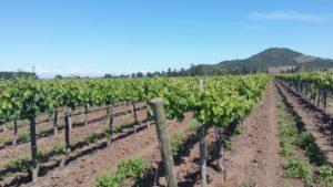 Winery Montgras in Santa Cruz in Chile