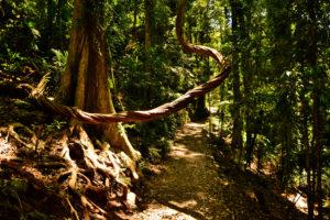 Gondwana Rainforest Australia UNESCO World Heritage - Brisbane Australia - Fraser Island UNESCO World Heritage Australia Australia outback in Queensland - Australia Travel Tips