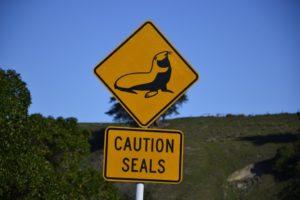 street Sign New zealand seals