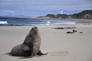 Seals in New Zealand