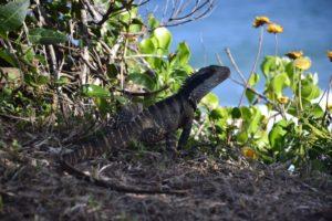 Port Macquarie Australia - Gondwana Rainforest Australia UNESCO World Heritage - Brisbane Australia - Fraser Island UNESCO World Heritage Australia Australia outback in Queensland - Australia Travel Tips