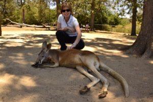 Saskia Hohe kangaroo Brisbane Lone Pine Koala Sanctuary