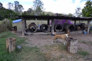 Cattle farm in Australia