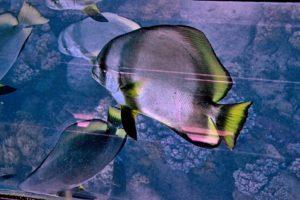 Great Barrier Reef Cairns Australia - Australia Travel Tips