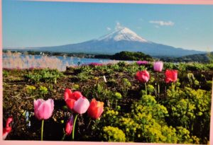 Postcard of Fujisan Japan