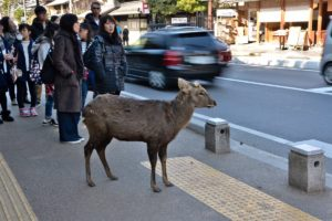 Nara deer park unesco world heritage Japan