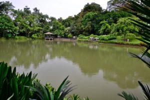 Botanic garden in Singapore UNESCO World Heritage - Singapore Travel Tips