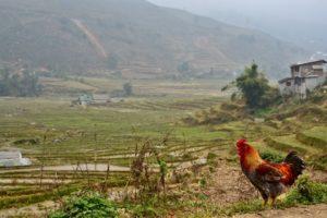 Sa Pa trekking villages in Vietnam rice terraces