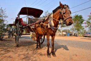 Horse cart in Bagan