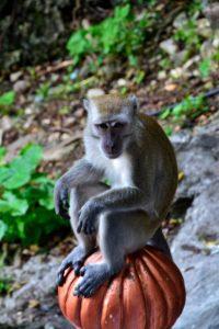 Monkeys at batu Caves Malaysia - Reisetipps für Malaysia