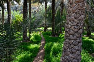 Al Ain Oasis dates palm groves UNESCO World Heritage United Arab Emirates Vereinigte Arabische Emirate