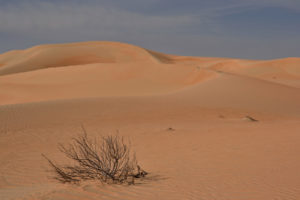 Empty quarter It is the largest continuous sand sea in the world, with an area of 650,000 square kilometres (250,000 sq mi), and 1,000 kilometres (620 mi) long and 500 kilometres (310 mi) wide. Al Rub' Al Khali desert United Arab Emirates Leeres Viertel Wüste Vereinigte Arabische Emirate