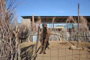 Erbent Desert Village Turkmenistan
